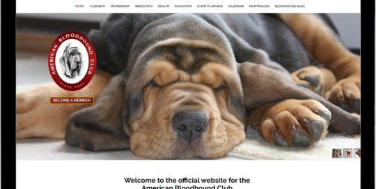 American Bloodhound Club 2020