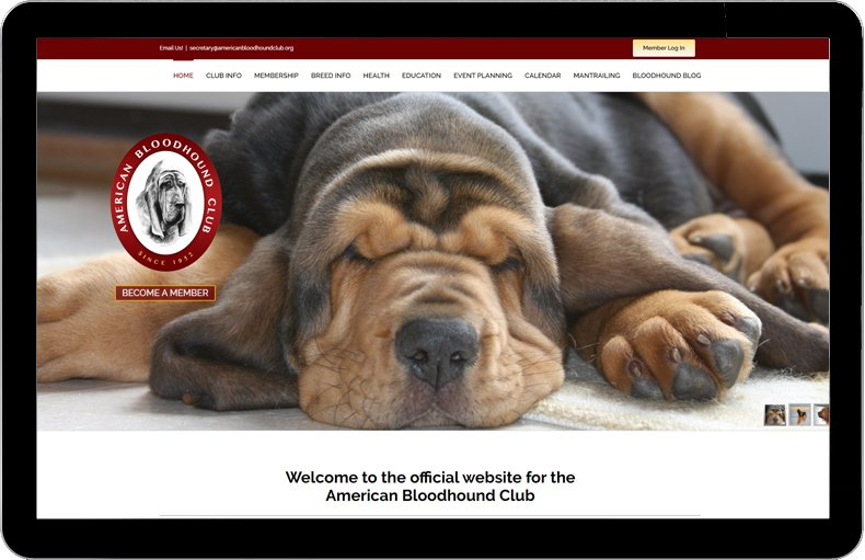 American Bloodhound Club 2020