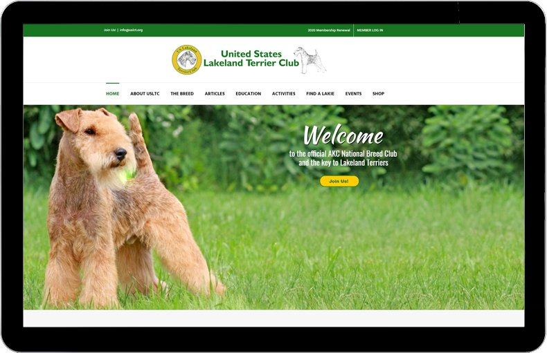United States Lakeland Terrier Club website image.