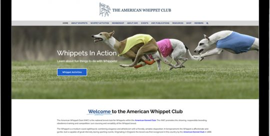 American Whippet Club