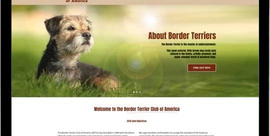 Border Terrier Club of America