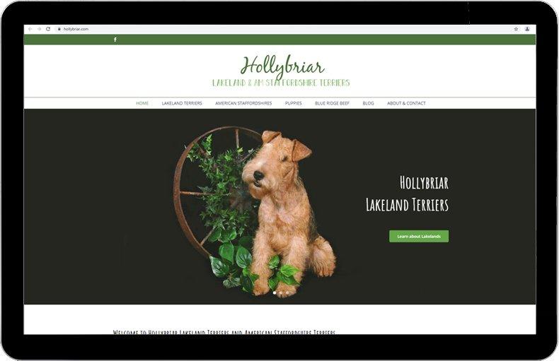 Hollybriar Lakeland Terriers